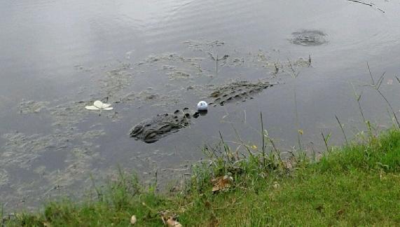 croc drop